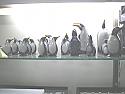 Lapis Lazuli, Marble and Bronze Pinguin Figures
